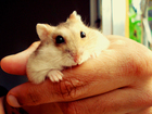 Have a pet hamster? Read this strange warning