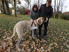 How a 150-pound mastiff got a new leg on life