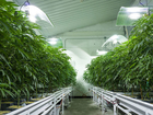Ohio announces more legal pot farmers