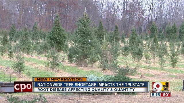 National Christmas Tree Shortage Hits the Four States