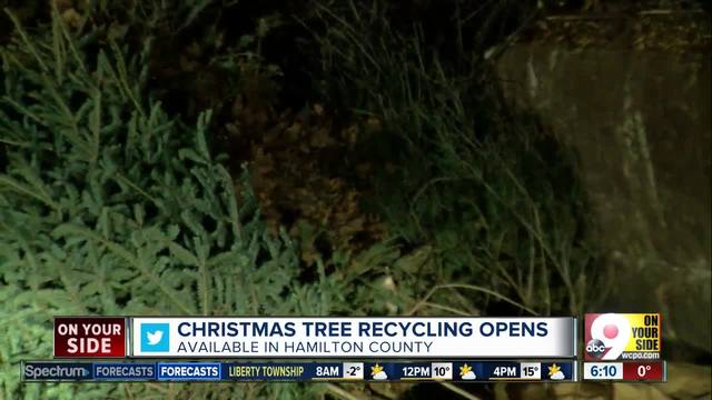 Recycled Christmas trees can spread new life