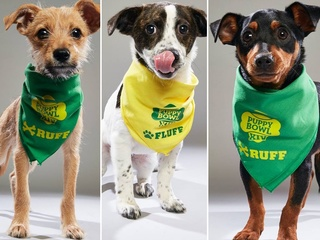 3 Butler Co. pups will be in Puppy Bowl XIV