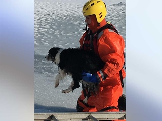 Firefighters save dog that fell into icy pond
