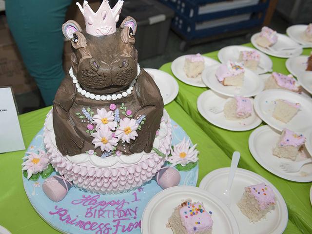 GALLERY Cincinnati Zoo celebrates baby hippo Fionas birthday Gallery