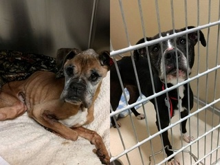 Sheriff: Owner of emaciated dogs arrested