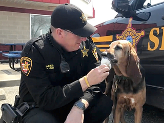 Ohio sheriff's bloodhound celebrates retirement