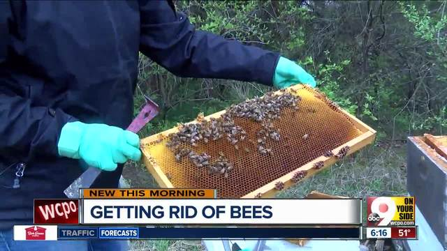 Spot bees near your home- Butler County beekeepers want to take them off…