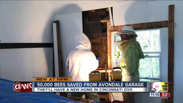 50-000 bees saved from garage- relocated to zoo