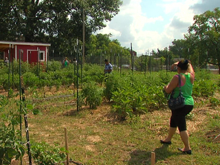 Community garden provides food and connections