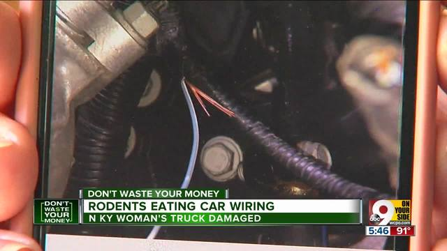 Mice Eating Wiring In More And More Cars Wcpo Cincinnati Oh