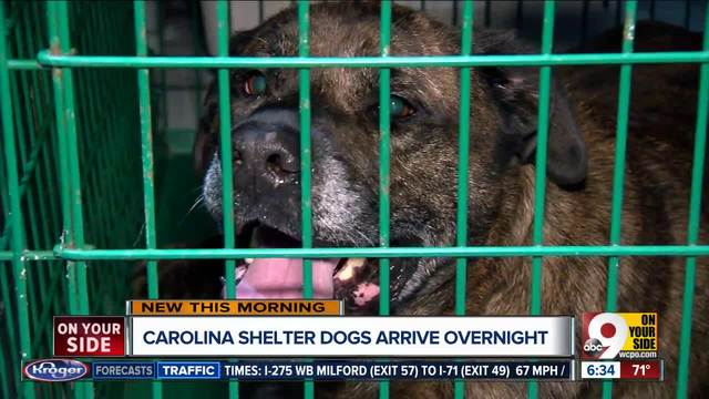 Carolina shelter dogs in the Tri-State
