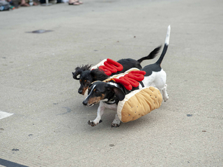 Photos: Running of the Wieners