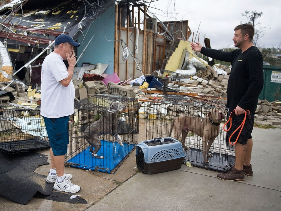 Hurricane Michael: Louie's Legacy needs foster homes to help shelters impacted...