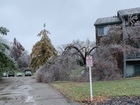 Who pays when a tree falls during an ice storm?