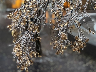 November ice storm strikes in the Tri-State